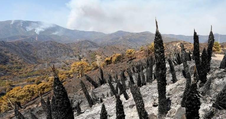 Дождь, начавшийся вчера, стал лучшим союзников в тушении пожара в Sierra Bermeja